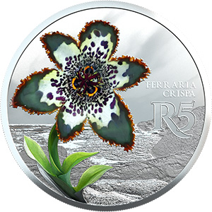 Sterling Silver Starfish Lily